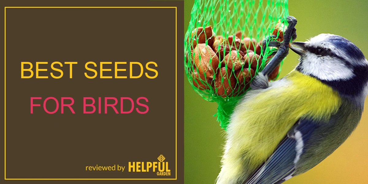 the guide to the best seeds for birds