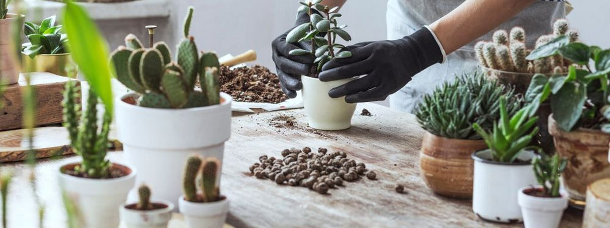 How To Find The Right Mix For Your Succulent - Buying Guide