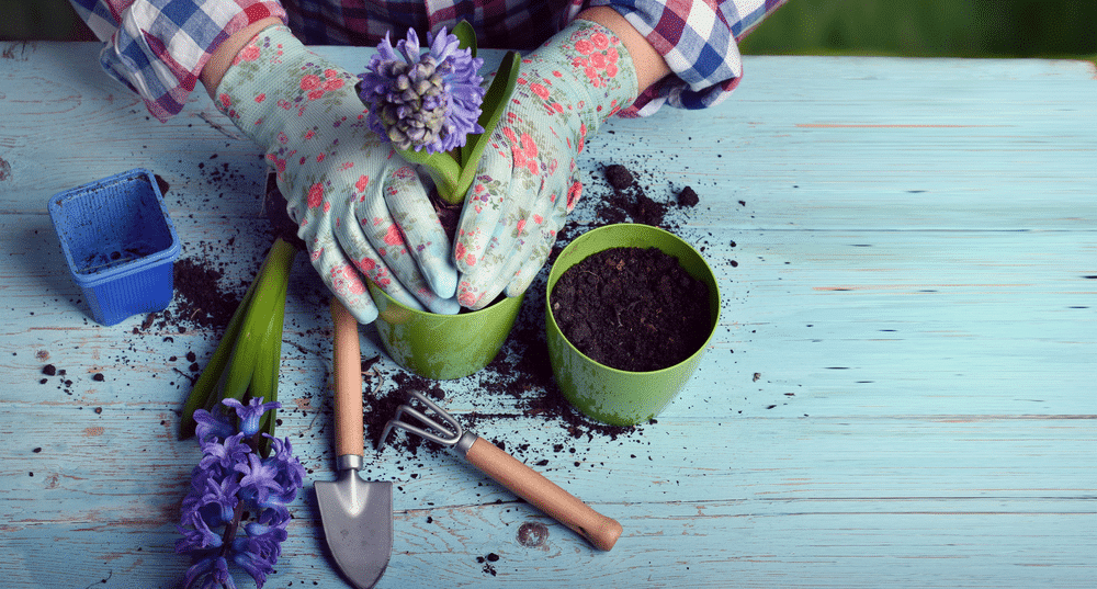 Can You Replace Potting Mix With Potting Soil To Save Money?