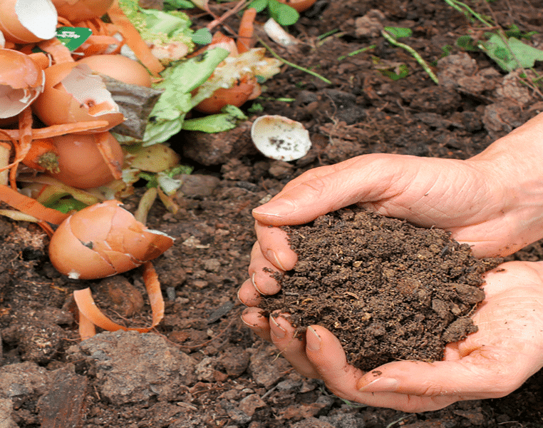 What Happens During Composting